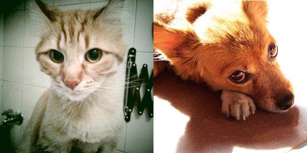 Foto di gatto e cane in primo piano Taddeo e Isotta
